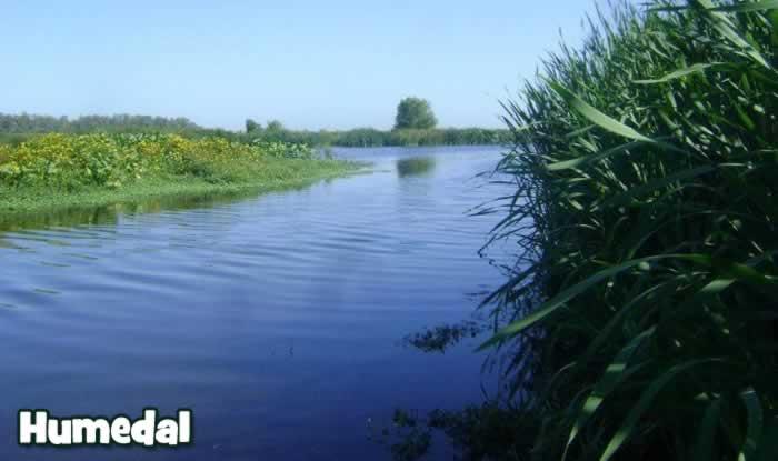Humedal_monitoreo_ambiental